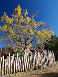 Title: Autumn Colour At The Zoo