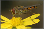 Title: Hover fly Camera: Nikon D80