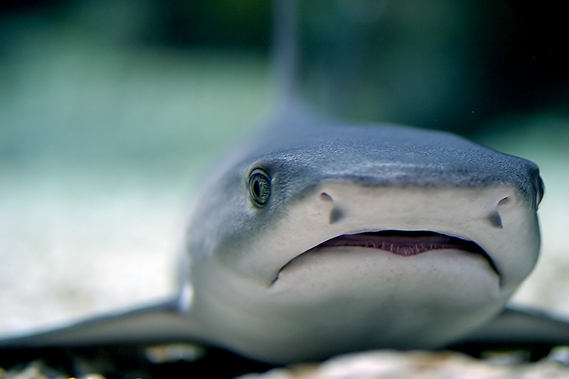 Are sharks ever happy?