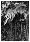 Title: Ferns and Bank