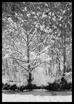Title: Winter in Monochrome