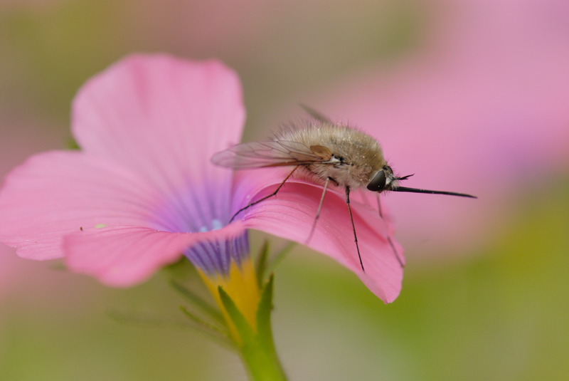 Fly & Flax flower