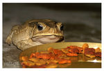 Title: Confused Toad
