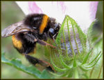 Title: Bumble