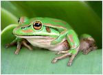 Title: Frog 2