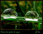 Title: two drops