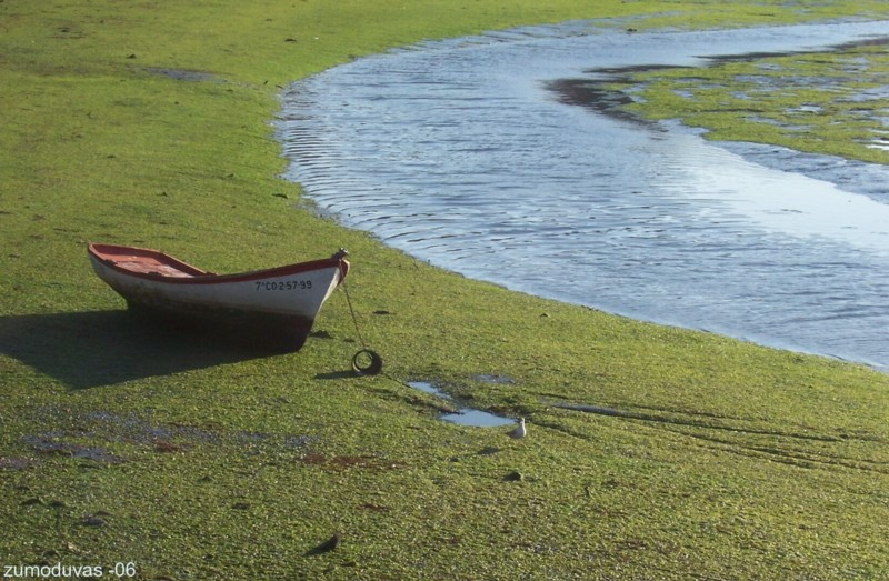 Aground in seaweeds