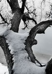 Title: snow_covered_tree