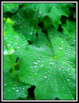 Title: After the Rain