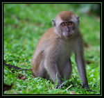 Title: Long Tailed Monkey #3Canon EOS Rebel T3i