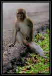 Title: Macaques Monkey #5Canon EOS Rebel T3i