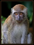 Title: Macaques Monkey #4Canon EOS Rebel T3i