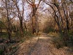 Title: Path in the Woods