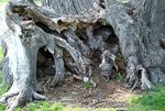 Title: Tree Cave
