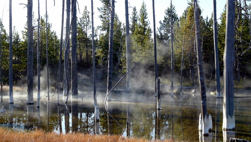 Geyser Mist in the Trees