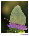 Title: Butterfly on flower