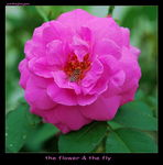 Title: The Flower & The Fly