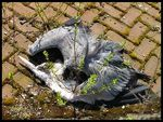Title: DEAD HERON (CITY BIRD [ 1 ])