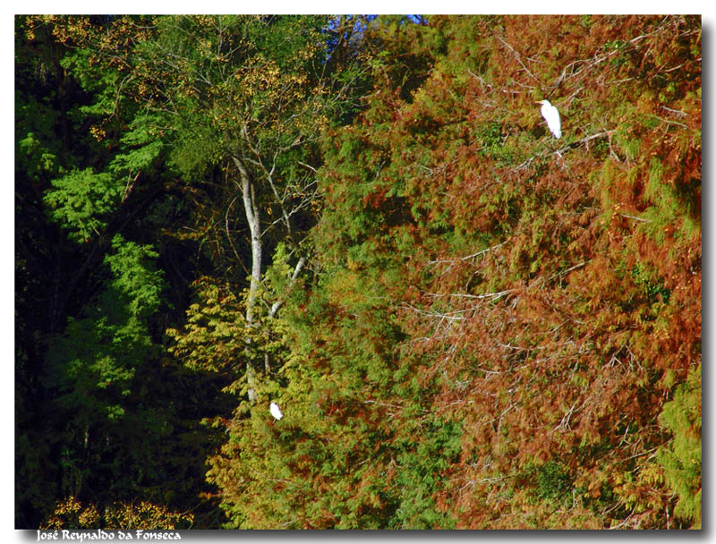 Herons in the forest...