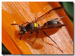 Title: Wasp 3...