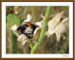 Title: The bug on the hollyhock