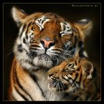 Title: Mother's Love