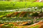 Title: Morning dew on a blade of grass