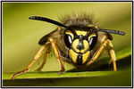 Title: Wasp 2