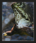 Title: Sea eagle
