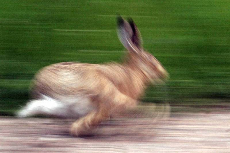 In A Hare-ing Hurry