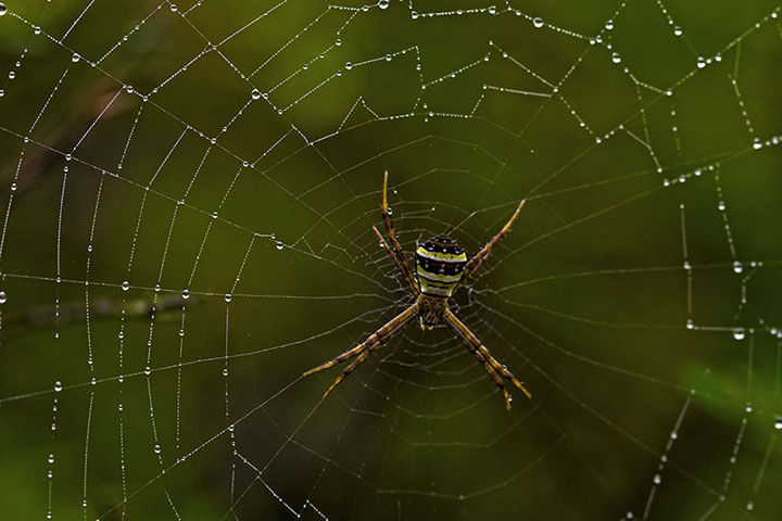 Spider after the rain