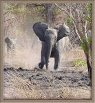 Title: The olifant charge Camera: SONY DSC F-707