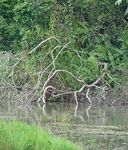 Title: swampy setting