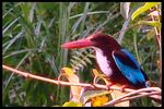 Title: the kingfisher pose