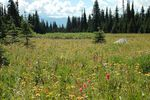Title: Alpine Meadows