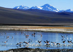 Title: High Elevation Flamingos