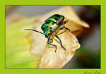 Title: JEWEL BUG
