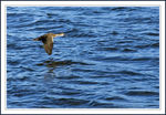 Title: Skimming Across the Water