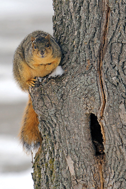 Perched Squirrel