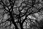 Title: Garry Oak and sunNikon D80