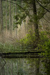 Title: pond in forest