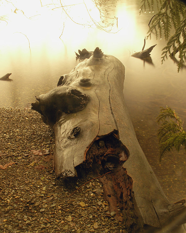logs in the mist