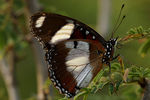 Title: Eggfly Camera: Pentax *ist DL