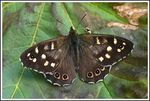 Title: My 1st Irish ButterflyPanasonic Lumix DMC-FZ50