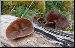 Title: Ears Of The WoodsPanasonic Lumix DMC-FZ50