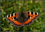 Title: Farewell From 2015