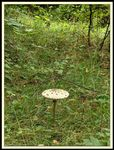 Title: Field scene with mushroom