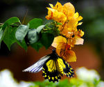 Title: flower & butterfly INikon D300 with MB_D10