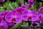 Title: orchid
