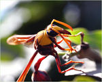 Title: *WASP*
